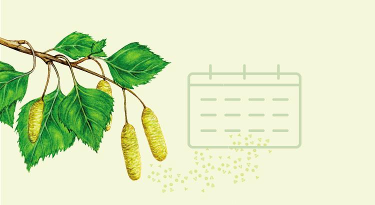 kalendarz pylenia