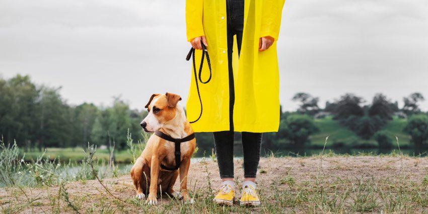 kobieta na jesiennym spacerze z psem