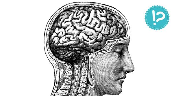 Fakty i mity: Mózg