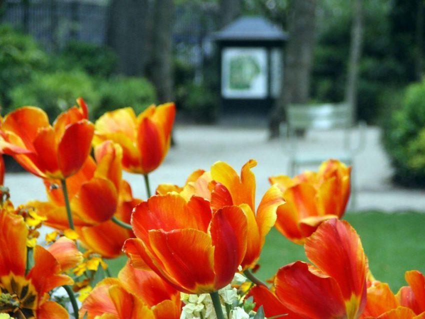 Kwiaciarnia w stylu eko