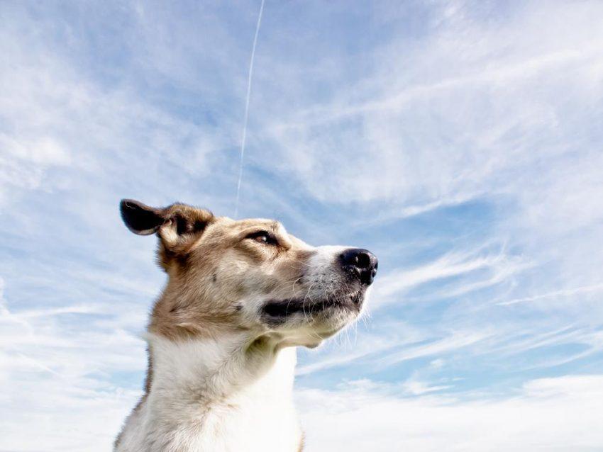 Psy tropiące choroby
