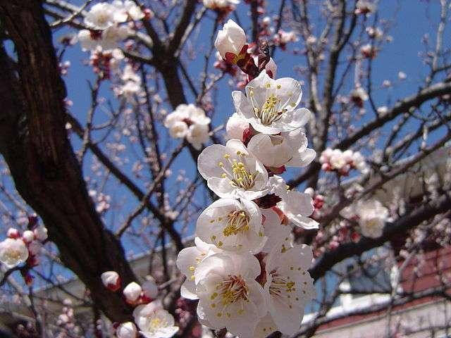 Kiedy przyjdzie wiosna? Komputer już wie