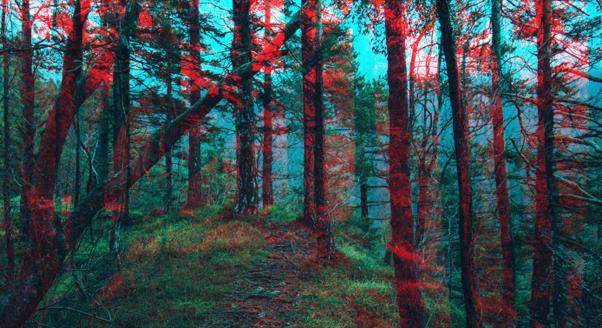 Las w 3D łagodzi stres