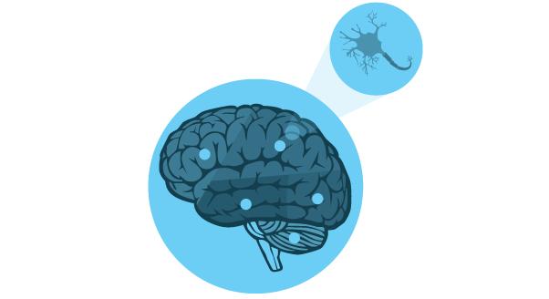 Lustrzany mózg, czyli zachowania zaraźliwe