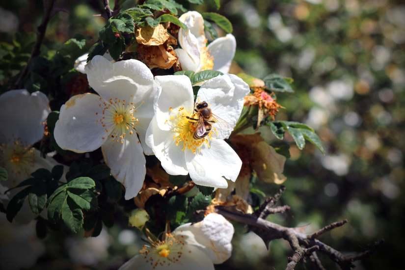Zatroszcz się o pszczoły