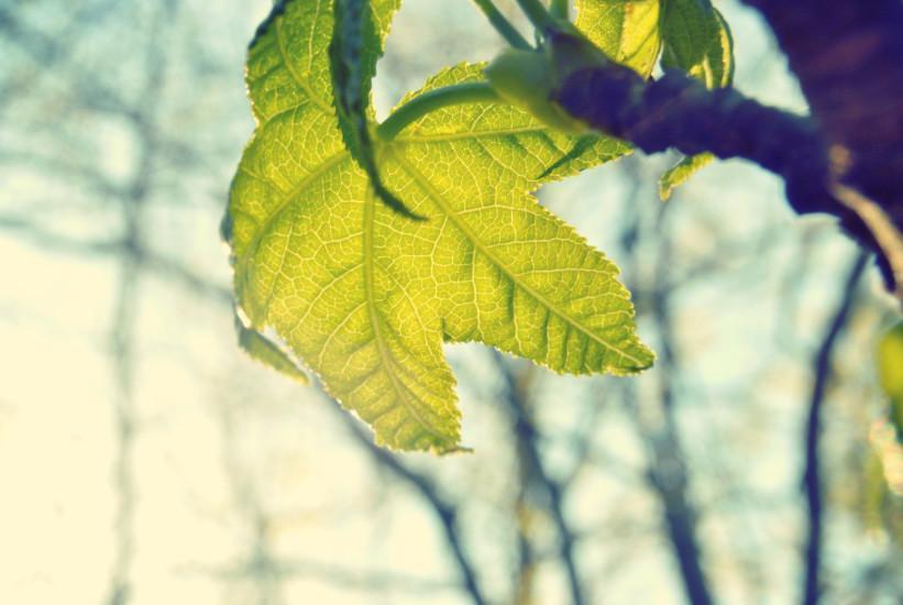 Zdrowe drzewa = zdrowi ludzie