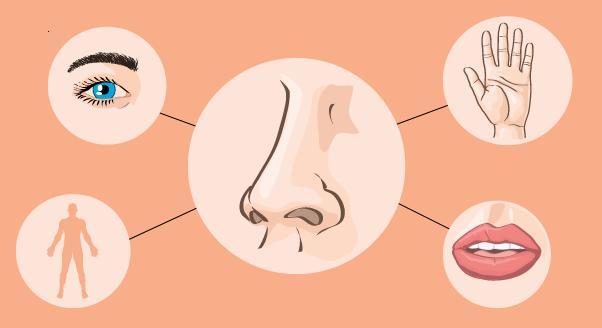 Feromony – seks masz w… nosie