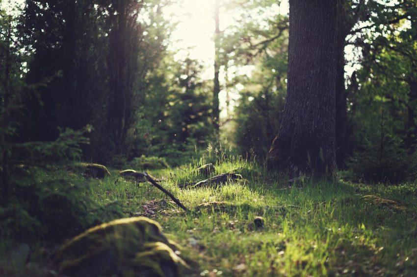 Wojna drzew z ozonem