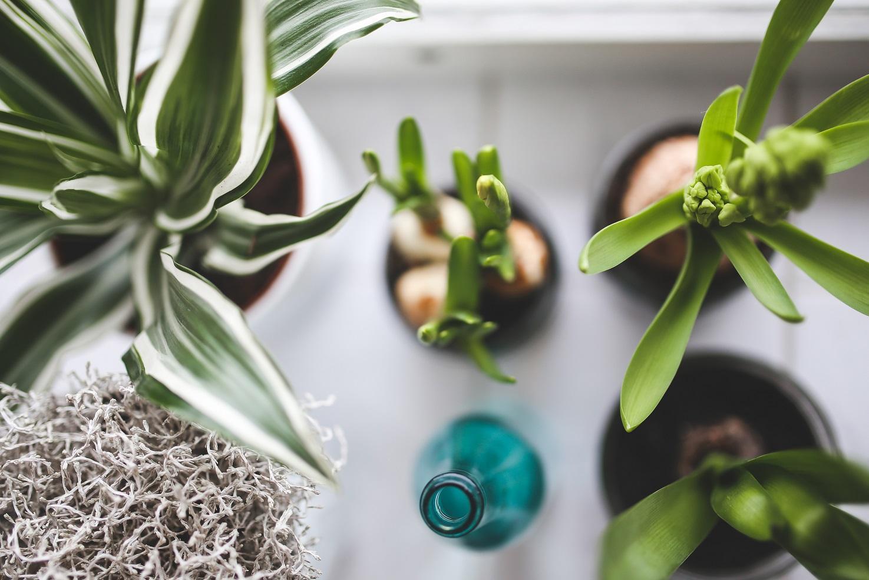 Wybieramy rośliny do domu