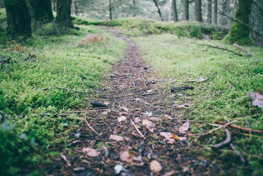 ADHD – spacer po lesie działa cuda