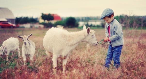 Mleko krowie vs. mleko kozie