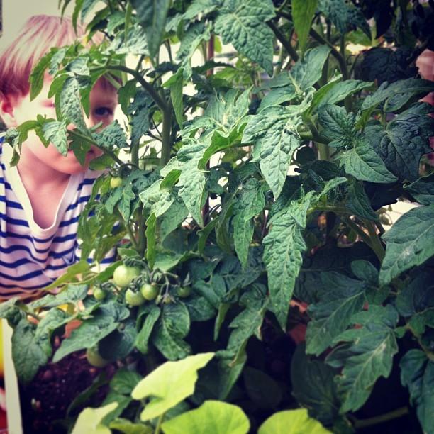 Zostań Miejską Ogrodniczką Hellozdrowie
