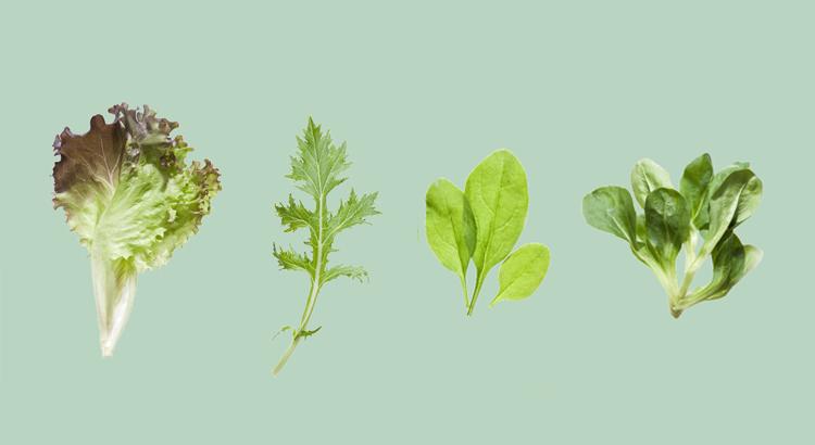 Mikrowarzywa – ogród na parapecie