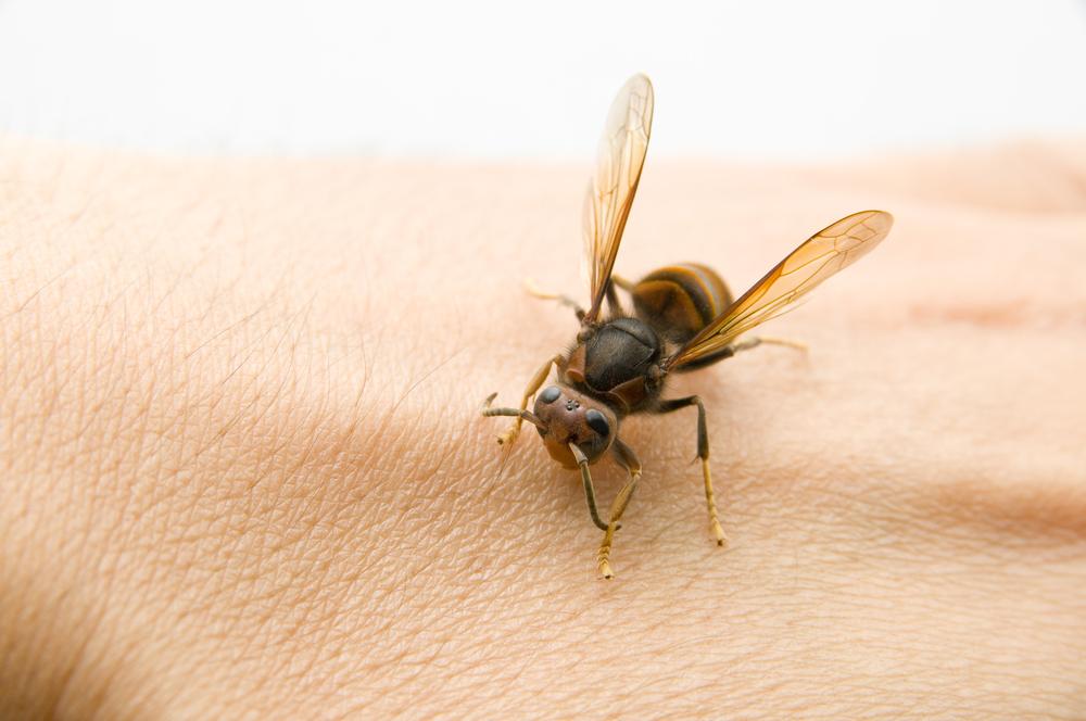 Jad owadów – jak rozpoznać uczulenie?