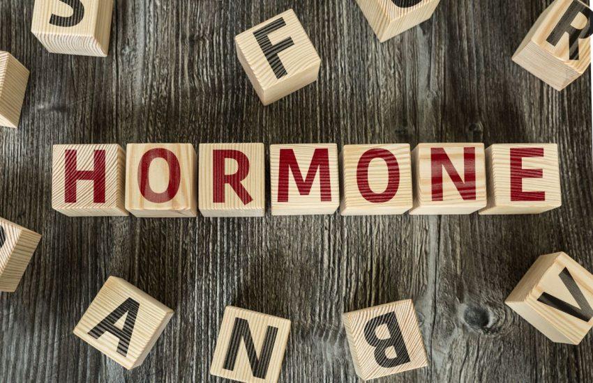 Z klocków ułożony jest napis hormone