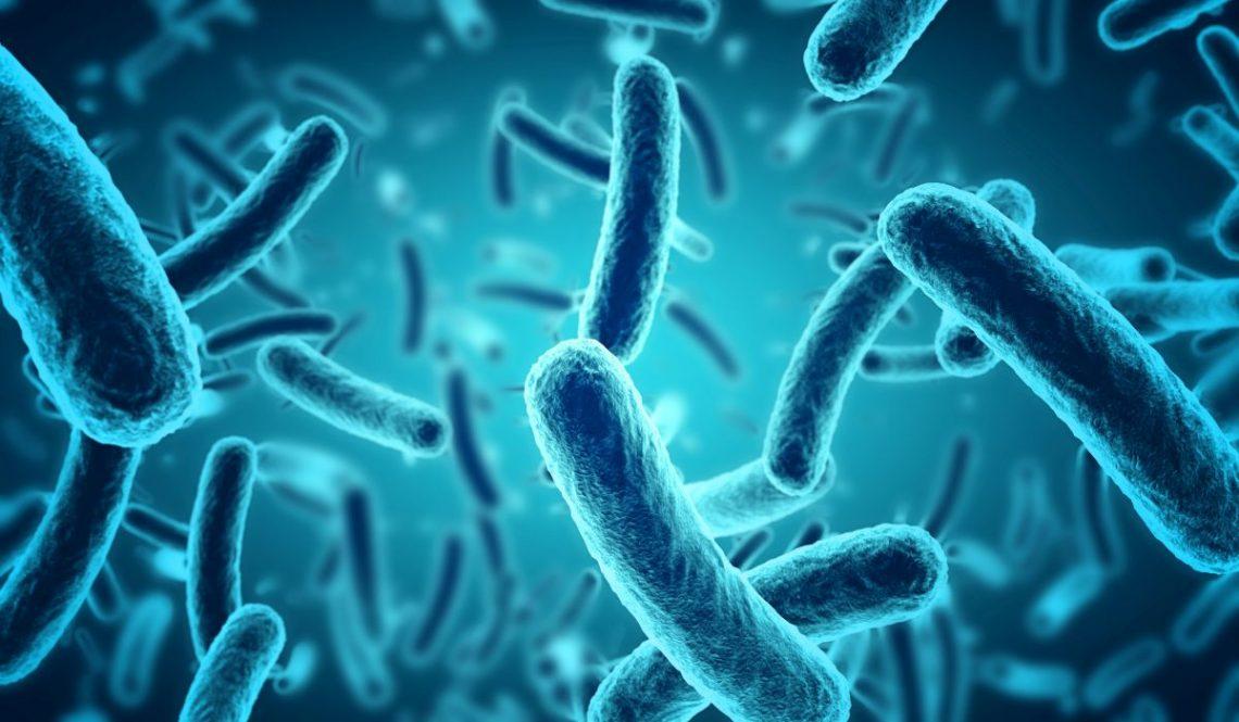 listerioza - skupisko bakterii