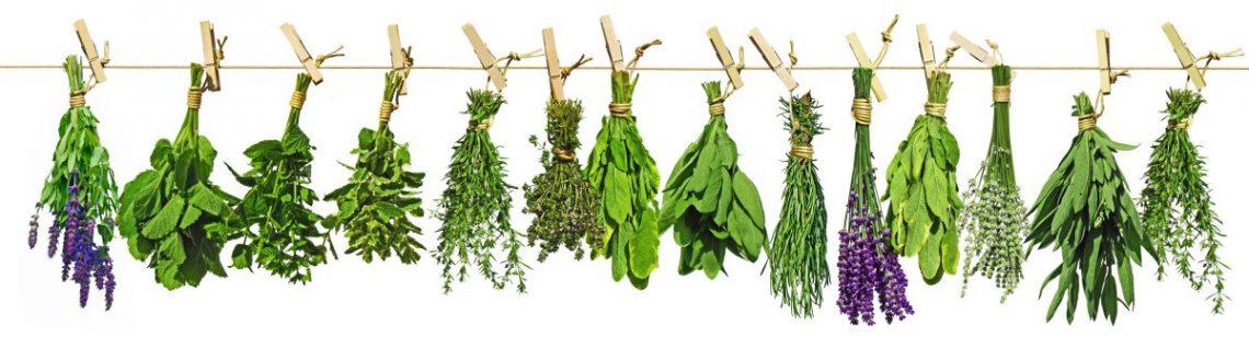 Na sznurku za pomocą klamerek przywieszone są różnego rodzaju zioła