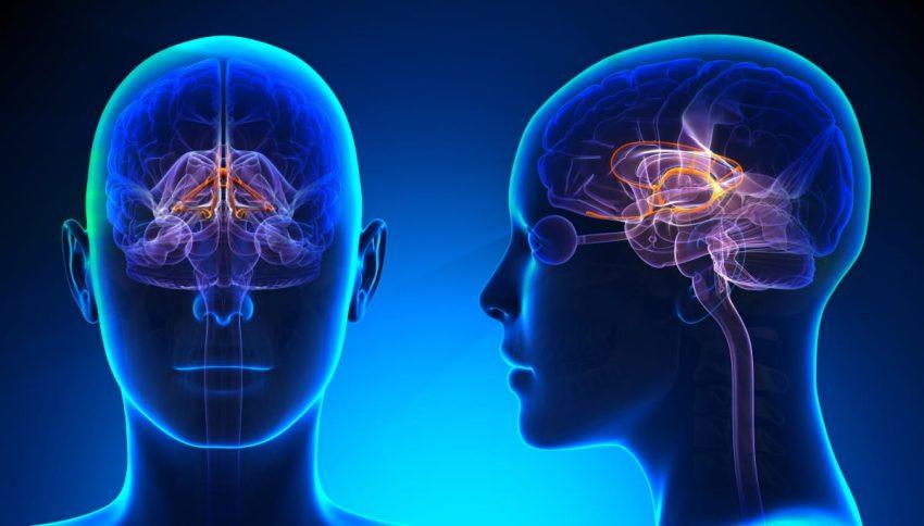 rzut mózgu ludzkiego w 3D