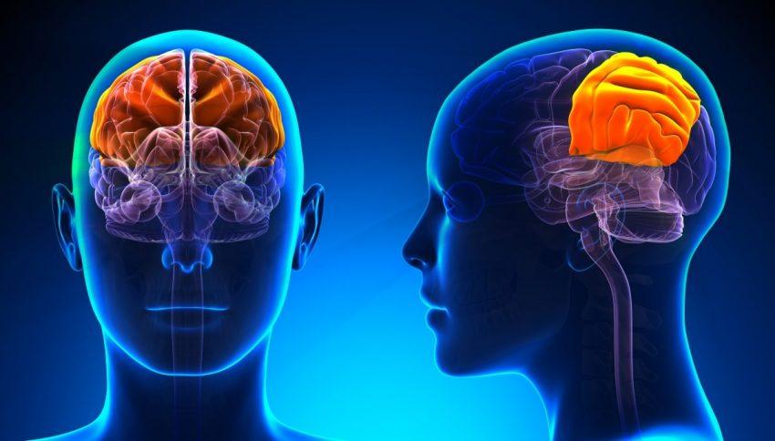 ilustracja mózgu w 3D