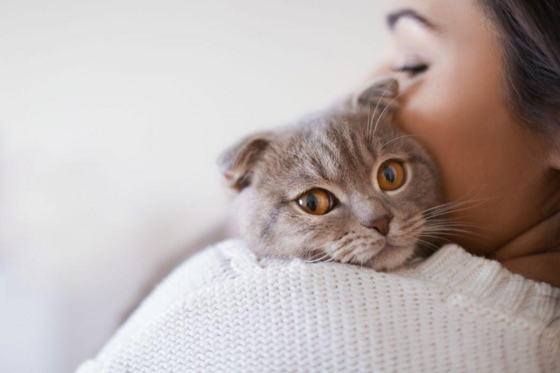 kobieta trzyma na ramieniu szarego kota