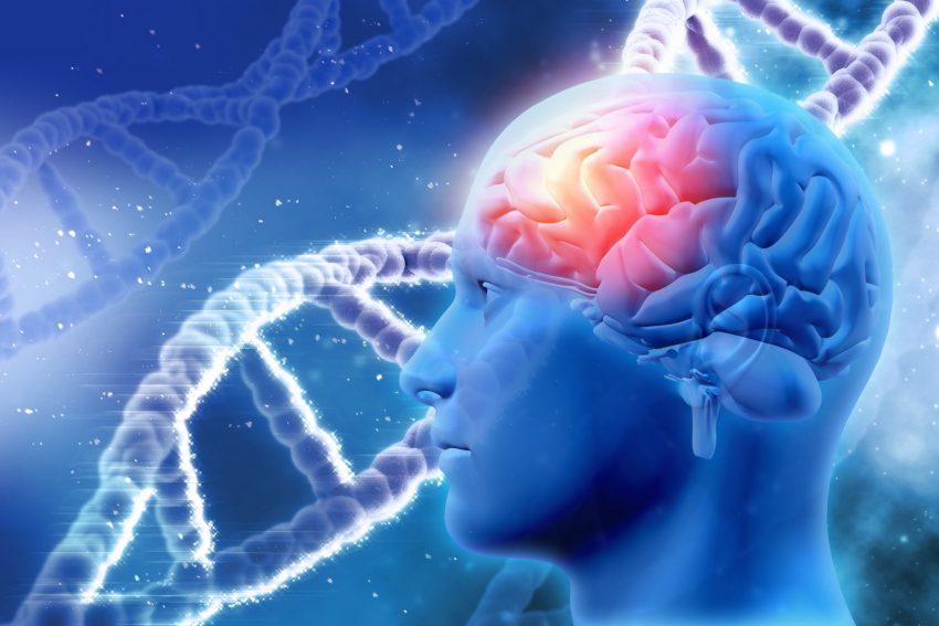 mózg w 3D