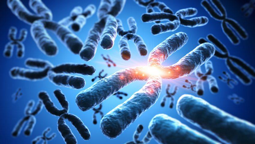 chromosom w 3D