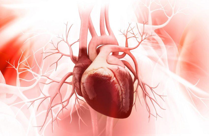anatomia serca ludzkiego