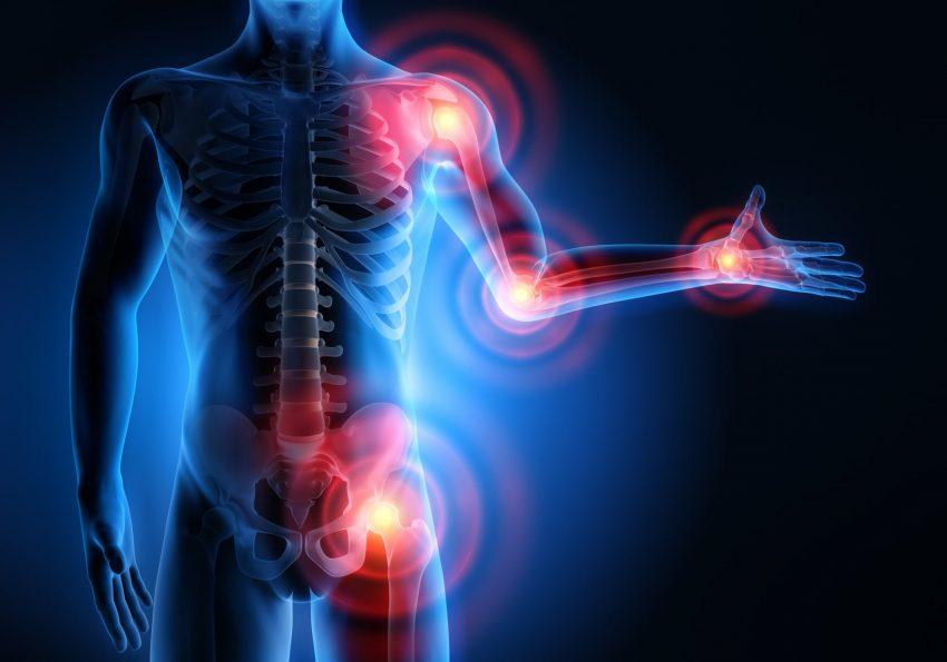 mięśnie w 3D
