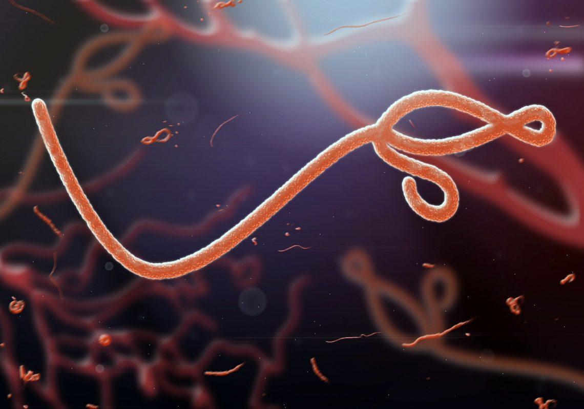 wirus eboli 3D