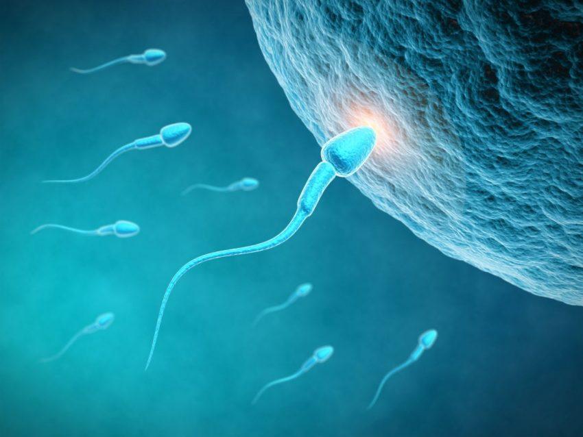 kilka plemników zbliżających się do komórki jajowej