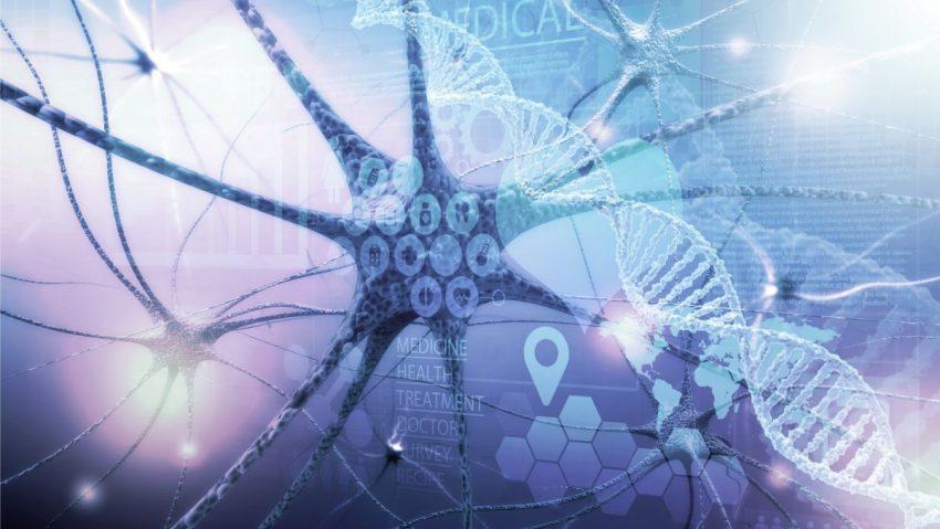 system nerwowego układu autonomicznego