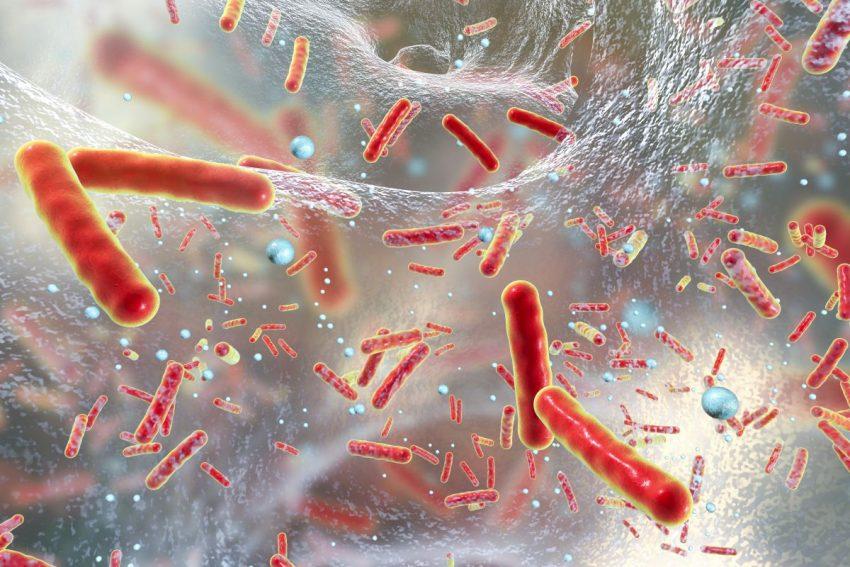 Bakterie w organizmie budujące odporność