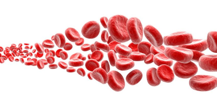Krwinki zmierzające w stronę aglutencji