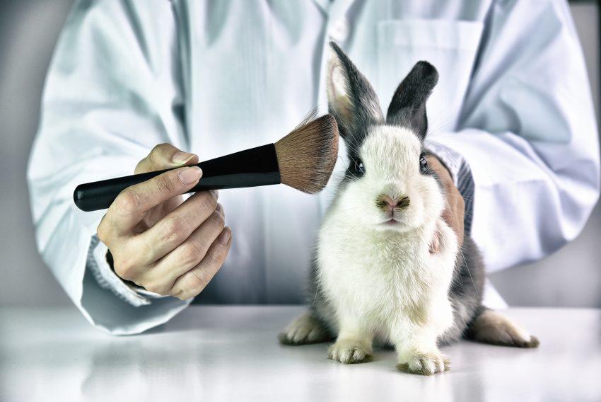 kosmetyki testowanie na zwierzętach