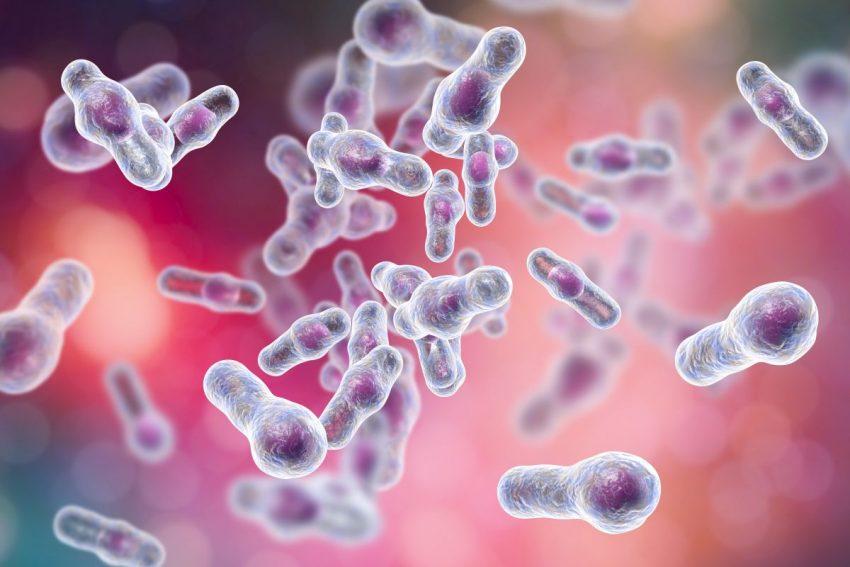 Pływające bakterie na odporność