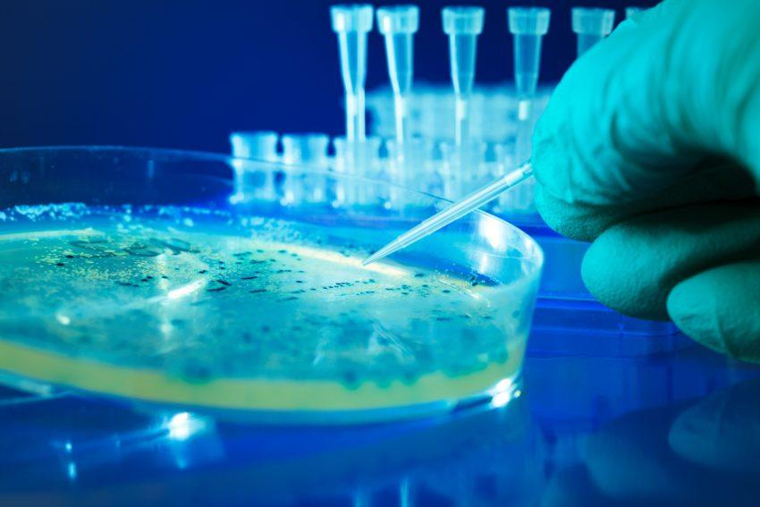 Salmonella - przyczyny i objawy zatrucia