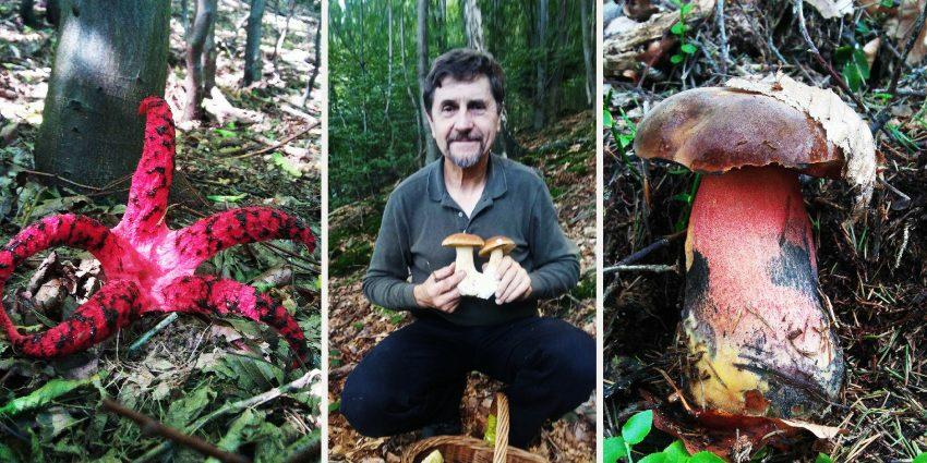 Justyn Kołek na zdjęciu z grzybami