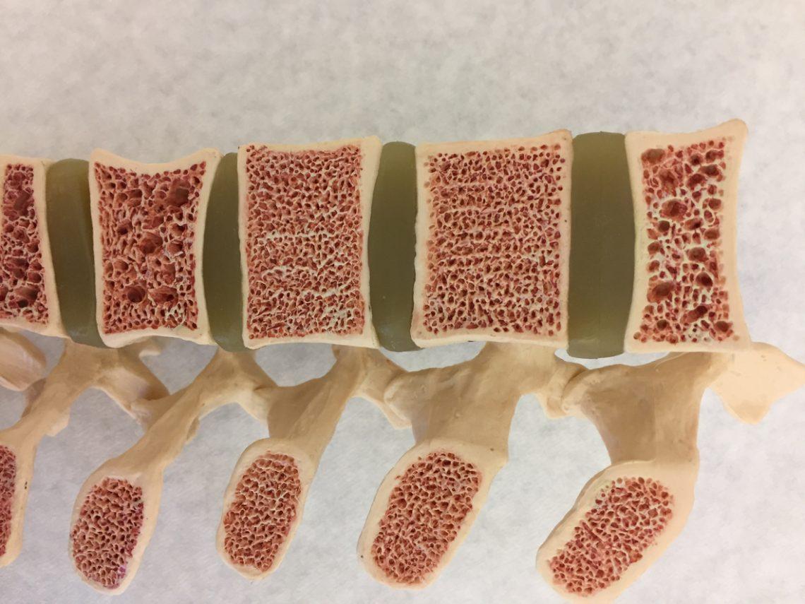 Szpik kostny - rola w organizmie człowieka