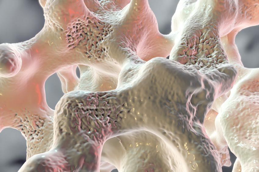 Tkanka kostna - rola w organizmie człowieka