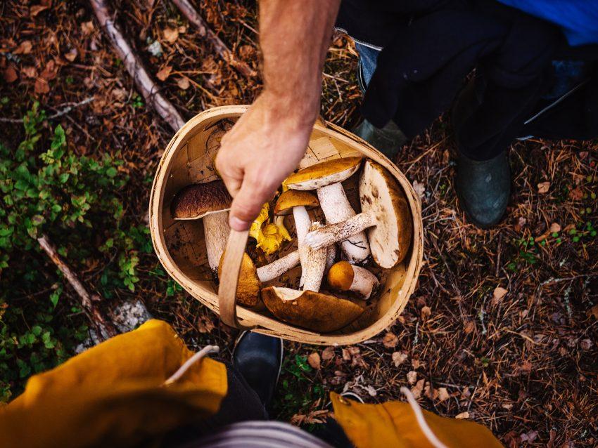 Zatrucie grzybami – jakie są jego objawy? Jak przeprowadzić pierwszą pomoc?